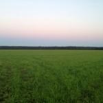 Закат, Щелковский район