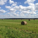 Снопы сена, поле