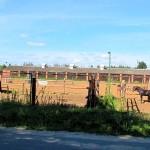 Конюшня, лошади, Щелковский район