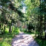 сосновый лес, щелковский район